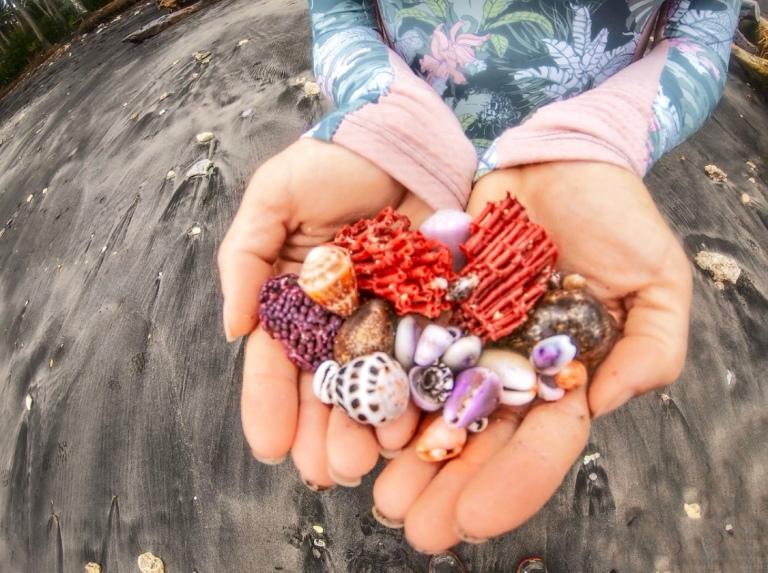 gamat bay shells